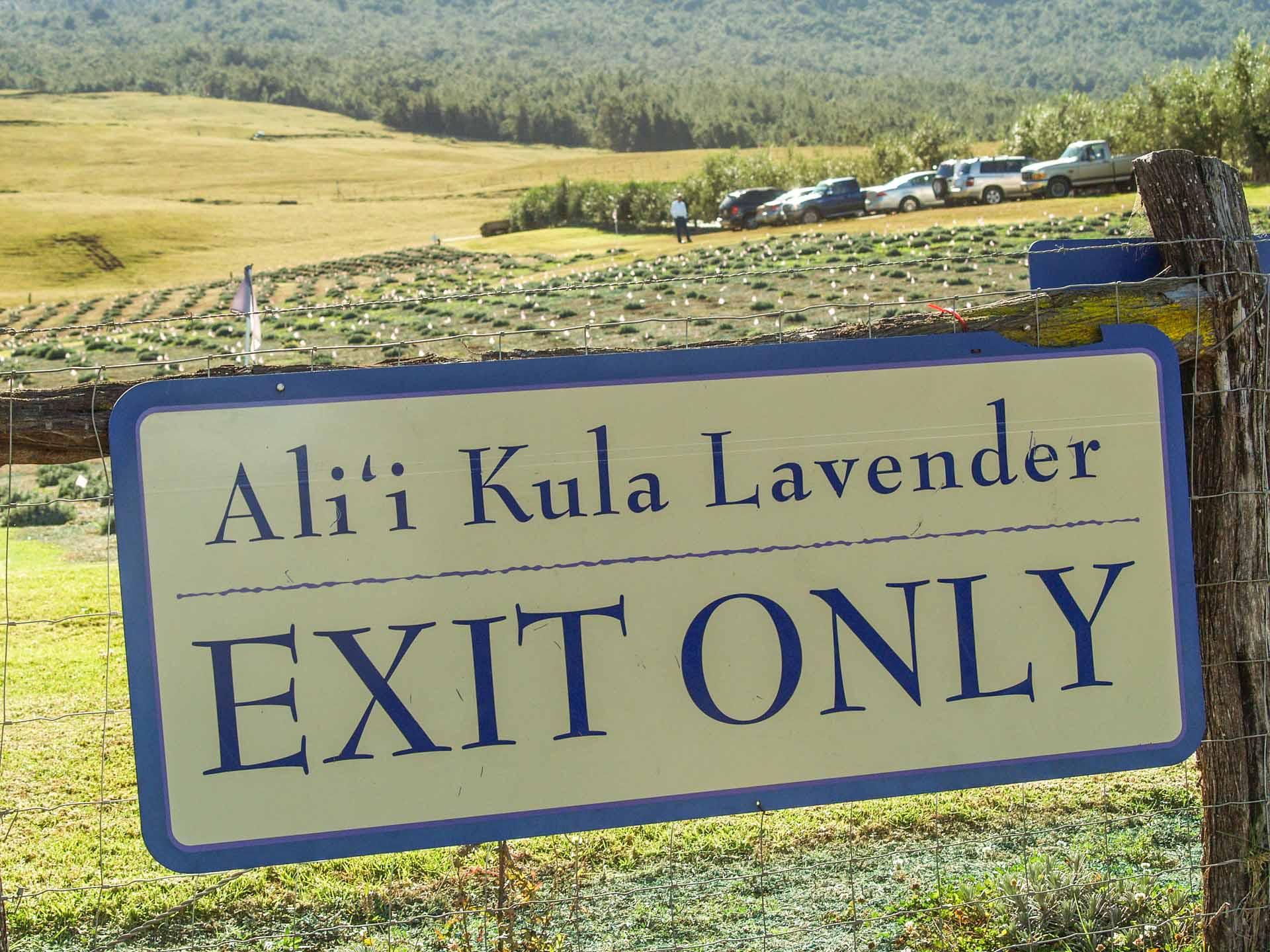 alii kula lavender exit sign