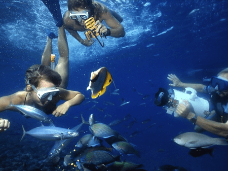 snorkeling-molokini